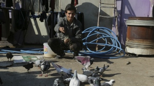 Ibrahim Othman, 15, tends to his family's pigeons on the roof of his house, in a neighborhood recently liberated from Islamic State militants, in eastern Mosul, Iraq on Wednesday, Jan. 18, 2017. (AP / Khalid Mohammed)