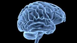The human brain is pictured in this file photo. (goa_novi / Istock.com)