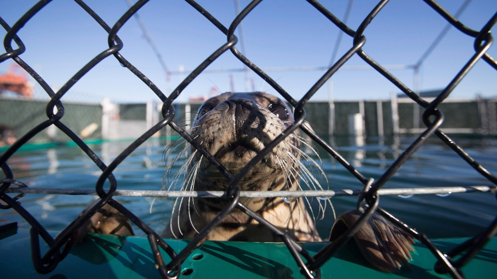 'Leave those seal pups alone,' aquarium urges after disturbing examples of human interference