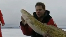A man on Lake Simcoe reeled in a whopper of a catc
