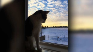 Lola doing some early morning bird watching. Photo by Robyn.