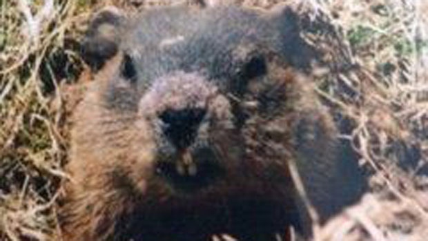 Groundhog - Hilden NS