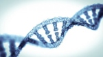 Researchers have unveiled 83 rare gene variants which exert a strong influence on human height. (from2015 / Istock.com)