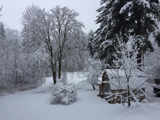 Many residents on Vancouver Island woke up to a sea of white on Sunday as more snow hit the region. CTV viewers shared their snow pictures.