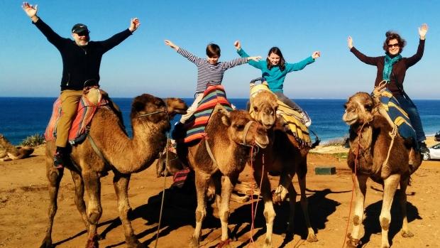 Angela camels