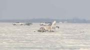 Extended: Plane crash site near Brunkild, Man.