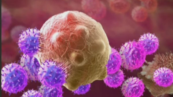 Researchers at the Universite de Montreal say new treatments entering human trials could produce an anti-cancer therapeutic vaccine.
