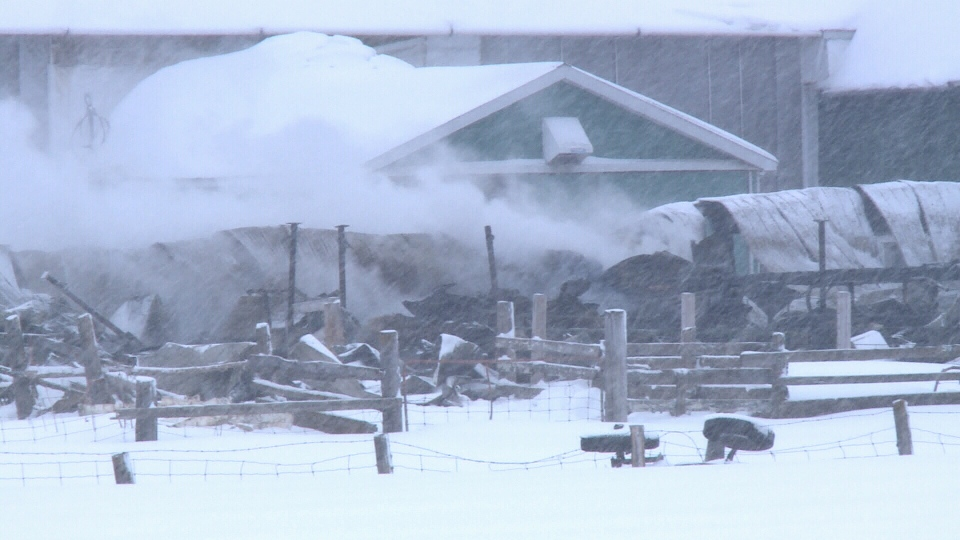 Firefighters continue to battle a barn fire where dozens of cows were killed overnight at Scullion Farm in Gatineau on Wednesday, Feb. 15, 2017.