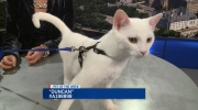 CTV Ottawa: Pet of the Week: Duncan the kitty