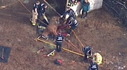 Chopper footage: Horse rescue in Maple Ridge