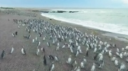 CTV News Channel: Millions of penguins crowd shore
