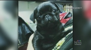 Possible pug scam at house where remains found
