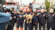 Puppy rescued after falling down a 230-foot hole