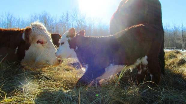 Just enjoying the sun and Mom. Photo by Greg Dednarek.