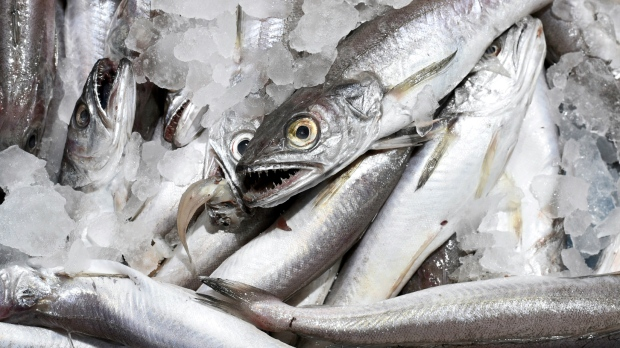 Mercury in fish could increase risk of als study ctv news for Why do fish have mercury