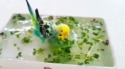Pet parakeet gets a bath fit for a princess