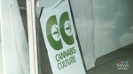 CTV Ottawa: Cannabis Culture opens in Ottawa