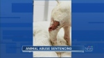 CTV Calgary: Sentence handed down in animal cruelt
