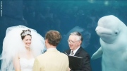 A couple's wedding was photobombed by a beluga whale