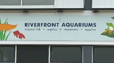 Riverfront Aquariums