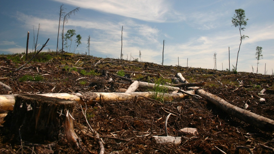 A clear cut section of forest is seen on Grassy Narrows First Nation territory near Dryden, Ont., in this 2006 handout image. (THE CANADIAN PRESS/HO-FreeGrassy.org)