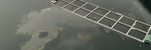 burdwood spill 1 .jpg