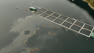 The federal fisheries department said the coast guard received a report early Sunday morning about a spill from a fuel tank at an Atlantic salmon aquaculture site in Echo Bay, about 70 kilometres east of Port Hardy. (Courtesy Kwikwasut'inuxw Haxwa'mis First Nation)