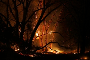 A tree burns as firefighters from across Kansas and Oklahoma battle a wildfire near Protection, Kan., Monday, March 6, 2017. (Bo Rader / The Wichita Eagle via AP)