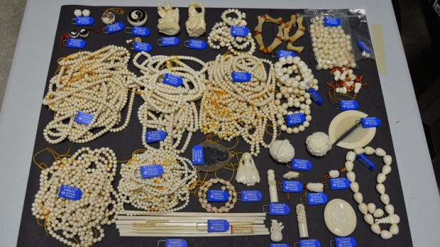 woman fined importing jewelry made from endangered species