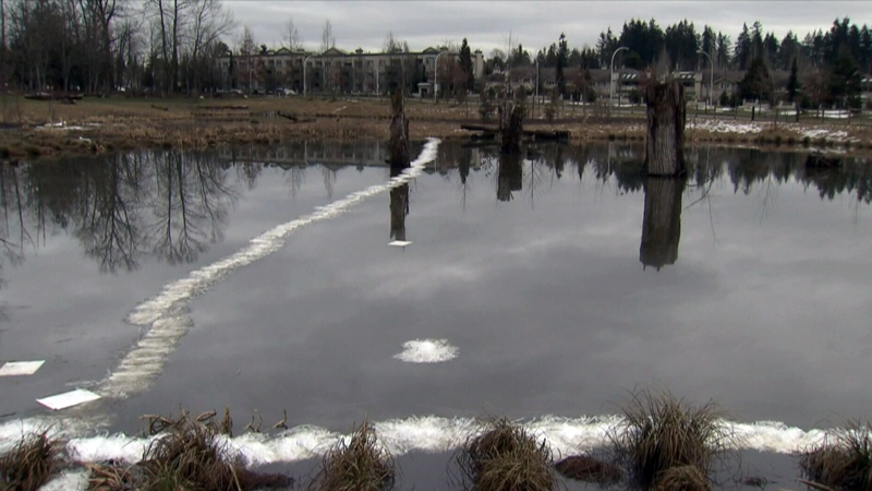 The cost of the cleanup of Newton Pond has been estimated at between $20,000 and $40,000.