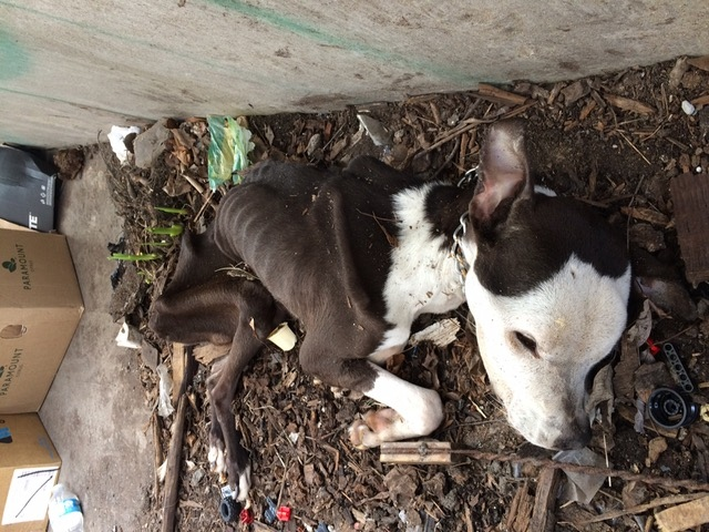 Dog Found Starved To Death Near Abandoned Windsor Building