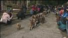 Sawatsky Sign-Off- Goat Run