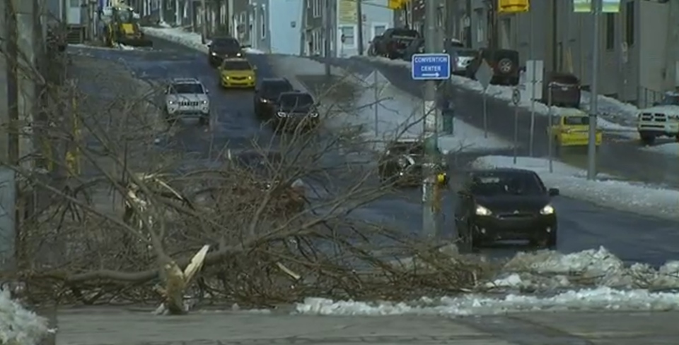 Wind gusts of up to 160 km/hr have taken down trees in St. John's, Newfoundland and Labrador. (CTV News)