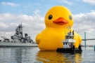 The world's largest rubber duck is among the attractions coming to Owen Sound July 7, 8 and 9, 2017, during the Ontario 150 Tour to celebrate Canada's 150th anniversary. (courtesy: Toronto Guardian via Twitter)