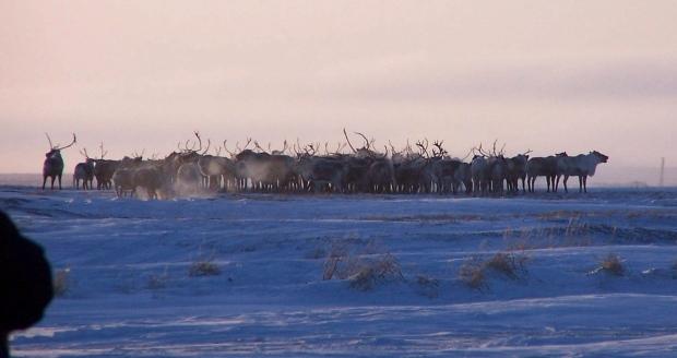 Alaska's Nunivak Island