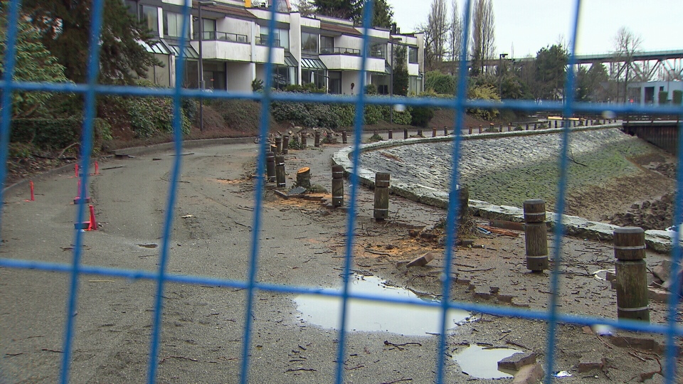 The City of Vancouver has removed a line of cherry trees along Alder Bay Walk, near Granville Island, but has promised they'll be replaced. March 13, 2017. (CTV)