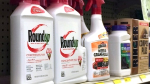 Containers of Roundup, left, a weed killer is seen on a shelf with other products for sale at a hardware store in Los Angeles on Thursday, Jan. 26, 2017. (AP Photo/Reed Saxon)