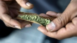 The survey found 53 per cent of drivers with drugs in their systems tested positive for cannabis. (Source: Mel Evans/AP)
