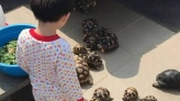 Boy surrounded by hungry tortoises