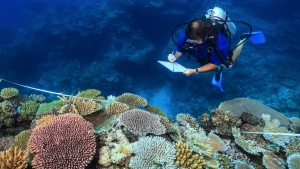 Scientist Andrew Baird surveys healthy reefs between Mackay and Townsville on Australia's Great Barrier Reef in Oct. 2016. (Tane Sinclair-Taylor / ARC Center of Excellence)