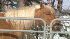 animal abuse, inhumane, equine abuse, Olds, Bea, D