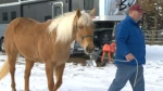 Horse owner says animal was abused