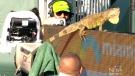 CTV Montreal: Iguana trending