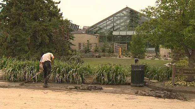 Staff layoffs at Calgary Zoo amid animal health division