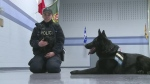 Only one woman in Windsor police canine unit