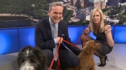 CTV Ottawa: It's National Puppy Day!