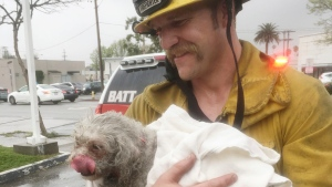 In this Tuesday, March 21, 2017 photo provided by Crystal Lamirande, Santa Monica firefighter Andrew Klein holding her dog, Nalu, in Santa Monica, Calif. (Courtesy of Crystal Lamirande via AP)