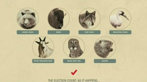 animal contest