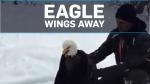 Injured eagle returned to wild