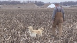 Farmers leery about planing early, even as warm weather comes